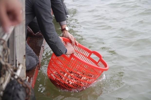 河内市举行规模巨大的放生仪式 鱼量超过五吨 hinh anh 1
