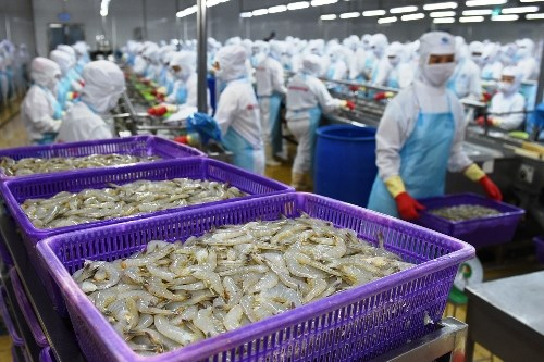 澳大利亚代表团赴越考察虾类出口生产加工情况 hinh anh 1