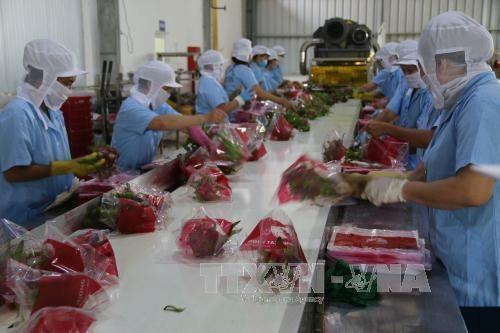 农业产业努力实现出口总额达405亿美元 hinh anh 1