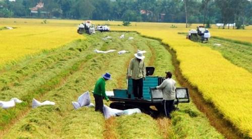 越南农业提出增长目标从2.9至3.05% hinh anh 1