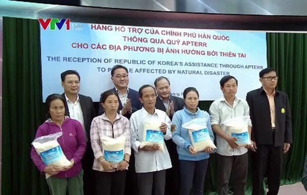 韩国政府向越南灾区群众捐赠1万吨大米 hinh anh 1