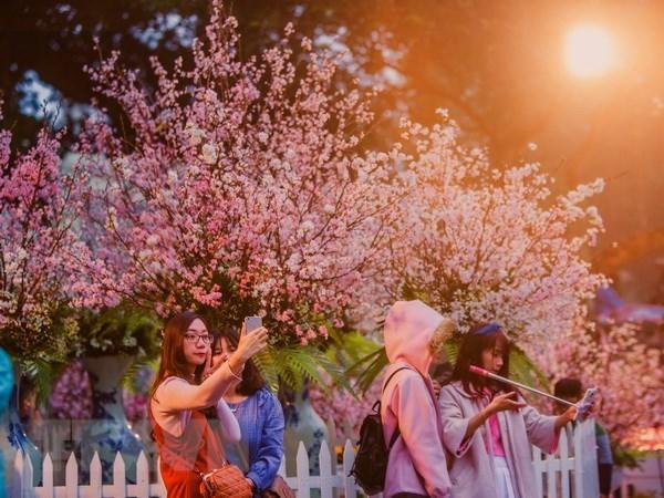 日本樱花在李太祖花园盛开 迎接日本文化交流节 hinh anh 2