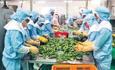 2018年第一季度越南农林水产品出口额达87亿美元 hinh anh 2