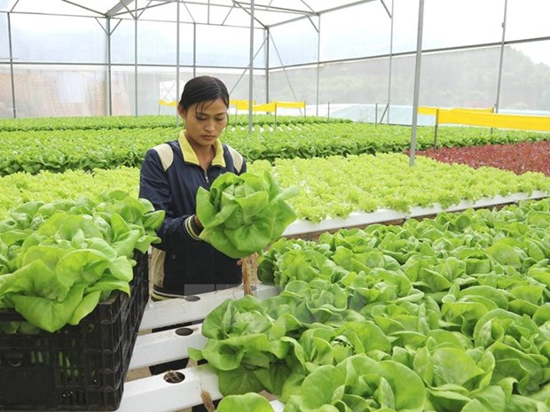 农业与农村发展部下决心实现农业GDP增长至少达3.0% hinh anh 2