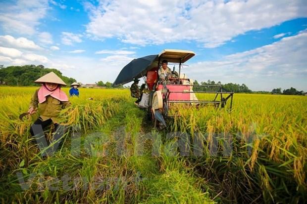 农业与农村发展部下决心实现农业GDP增长至少达3.0% hinh anh 1