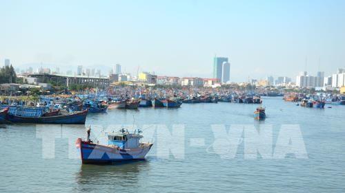 加强对海上渔船捕捞管理 hinh anh 1