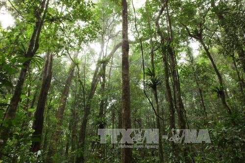 越南森林覆盖面积达1441万多公顷 hinh anh 1