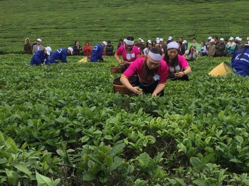 2018年第三次木州茶叶节有助于打造木州名茶品牌 hinh anh 1