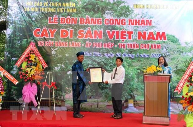 越南安江省三棵大花紫薇树被列入越南遗产树名录 hinh anh 1