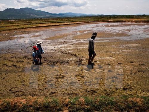 《气候变化背景下实现可持续发展的绿色经济》一书问世 hinh anh 1