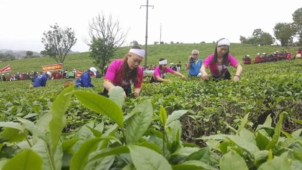 2018年第三次木州茶叶节有助于打造木州名茶品牌 hinh anh 2