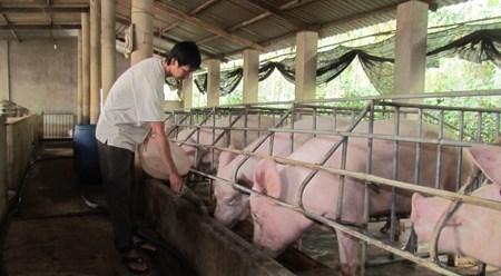 出口畜牧产品 ——协助畜牧业解决困难的重要措施 hinh anh 1