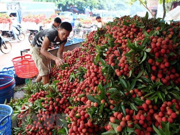 北江省注重发展主要出口产品 hinh anh 1