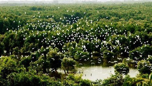 保护在同塔省乌檀白千层树林的珍贵鸟类 hinh anh 1