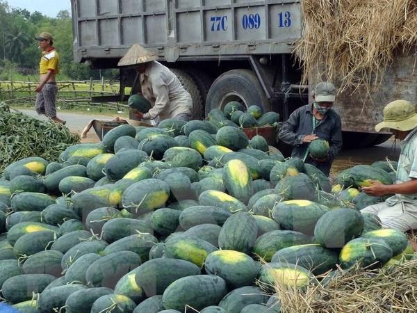 广义省与中国企业签署西瓜和其他农产品销售合作协议 hinh anh 1