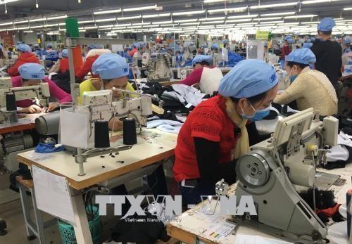 大部分越南纺织服装企业已签好第二季度订单 hinh anh 1