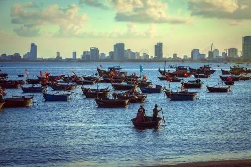 岘港市努力提高海鲜产品的可追溯性 hinh anh 2