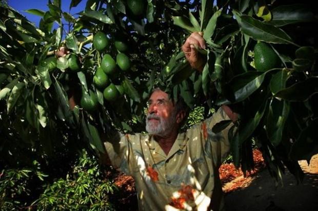 越南与墨西哥农业领域合作潜力巨大 hinh anh 1