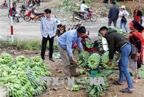 莱州省:越中缔结友好村寨模式带来诸多实际效果 hinh anh 1