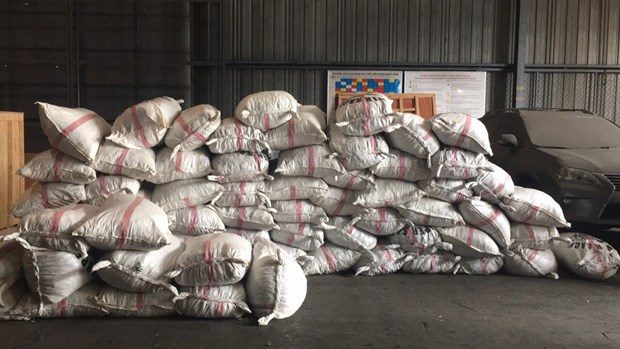 胡志明市海关局继续缴获非法进口的3.3吨穿山甲鳞片 hinh anh 1