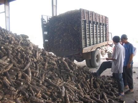 越南乂安省注重推进农林水产品出口 hinh anh 1