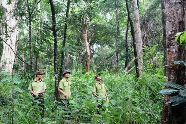 有关保护和发展森林的违法案件大幅下降 hinh anh 1