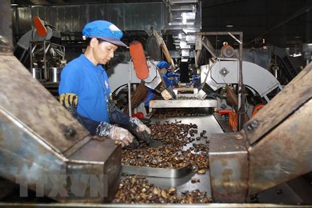 越南腰果业力争提高产品附加值 hinh anh 1