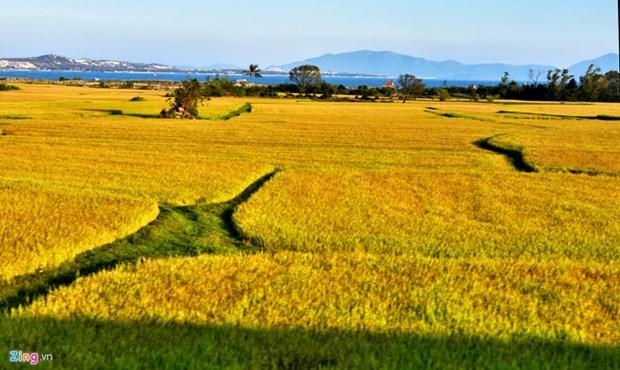 广义省优质有机大米生产协助项目初见成效 hinh anh 2