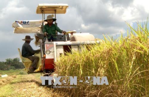 广义省优质有机大米生产协助项目初见成效 hinh anh 1