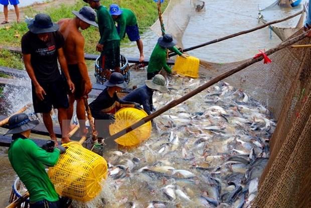 越南水产品养殖产量增长6% hinh anh 1