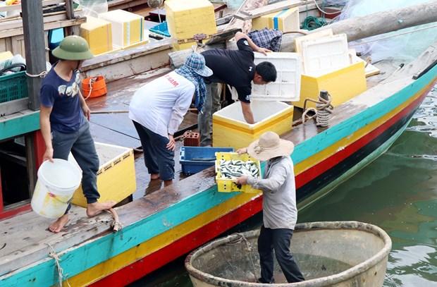 越南中部各省致力解决海洋环境污染事故 恢复灾区生产经营活动 hinh anh 2