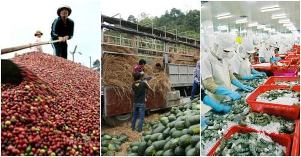 越南走向农林水产品可持续出口 hinh anh 1