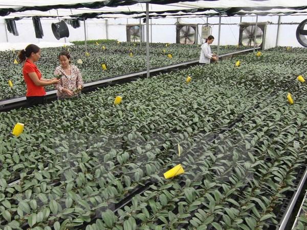 越南广宁省推进农业可持续发展 hinh anh 2