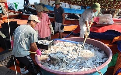 越南中部四省在海洋环境污染事故发生两年后当今的面貌 hinh anh 1