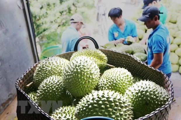 泰国出口连续14个月增长 hinh anh 1