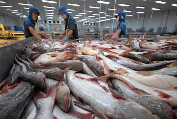 越南查鱼对美国出口仍呈现增长势头 hinh anh 1