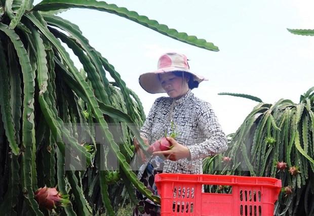 2018年农林水产品出口额将突破400亿美元大关 hinh anh 1