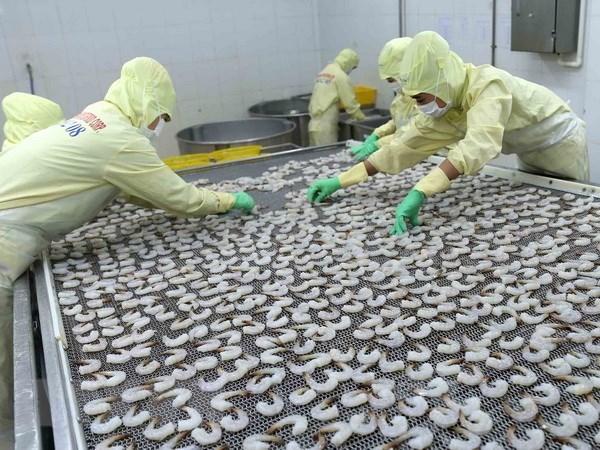 欧盟市场仍保持越南虾类产品最大进口市场地位 hinh anh 1