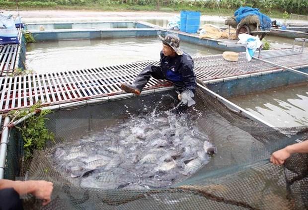 前5月越南水产品捕捞产量增长2.4% hinh anh 1