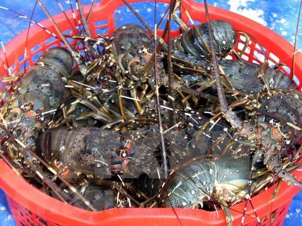 VASEP提议加强虾类产品暂时进口和复出口活动的监管工作 hinh anh 1