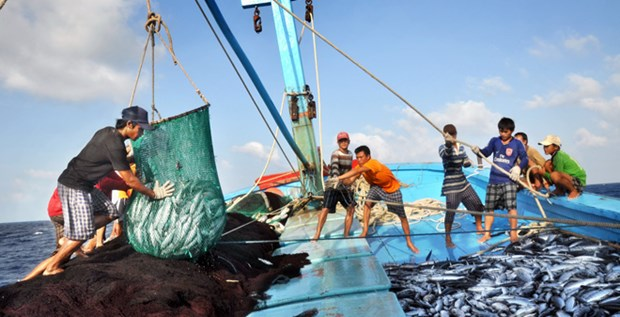 泰国多措并举打击非法捕捞活动 hinh anh 1