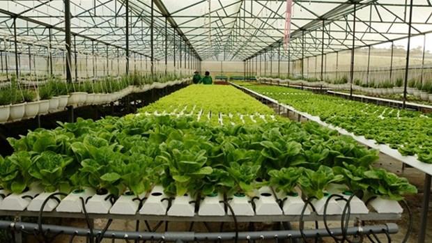 越南芹苴市与荷兰加强高科技农业合作 hinh anh 1