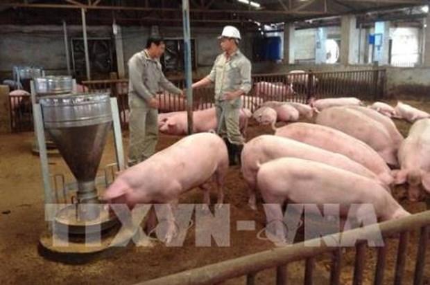 《畜牧法》助推越南畜牧业发展 hinh anh 1
