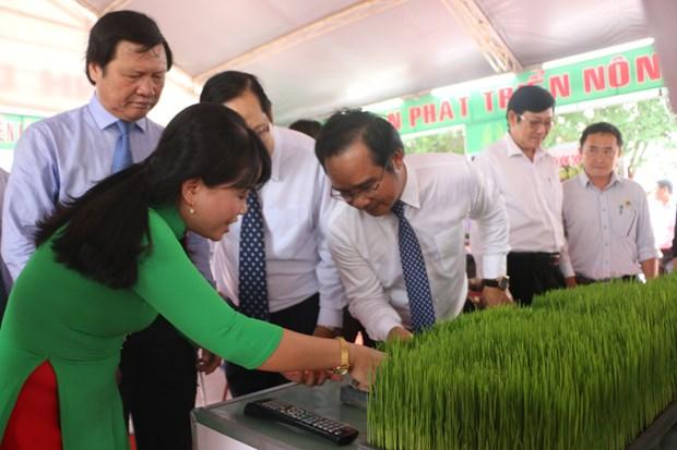 第一届九龙江三角洲水稻节在隆安省举行 hinh anh 1
