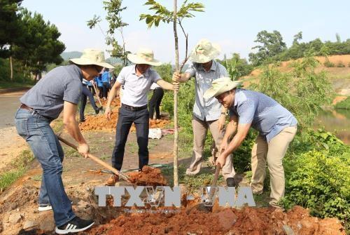 越南积极响应世界防治荒漠化与干旱日 hinh anh 1