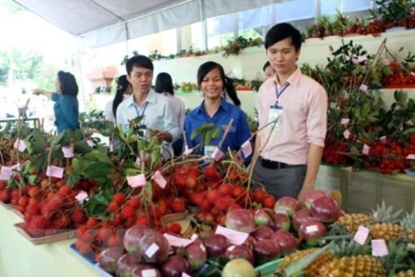 关于韩国农产品农药残留肯定列表制度研讨会在河内举行 hinh anh 1