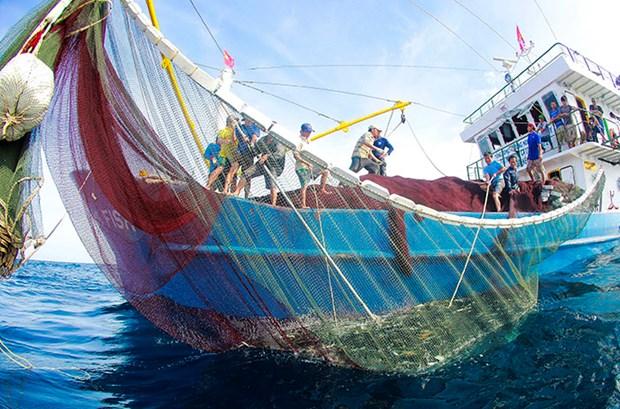 越南渔业迎来新机会 hinh anh 1