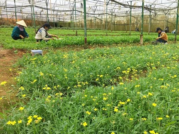 今年前6月芹苴市农业生产增长率较高 hinh anh 1