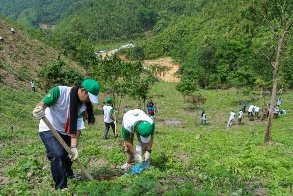促进从事社会林业及气候变化领域的各社会组织的参与度 hinh anh 2