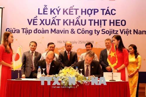 越南首次成功向国外出口猪肉 hinh anh 1